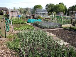 Do you have or would like an allotment?